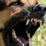 Istituiti percorsi formativi per i proprietari di cani