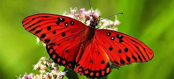 Nel mondo delle farfalle
