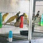 Uccelli protetti in gabbia: denunciato torrese