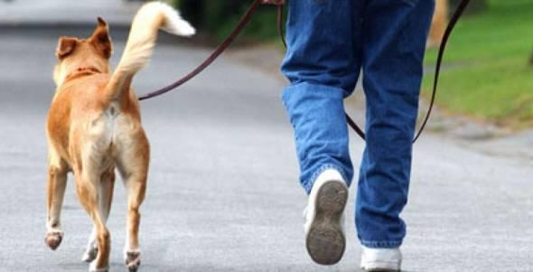 La proposta, un'area sgambamento cani in città