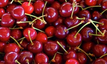 Torna la festa della ciliegia 🗓