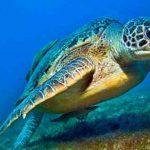 Ritornano in mare 7 esemplari di Caretta al largo di Punta Carena