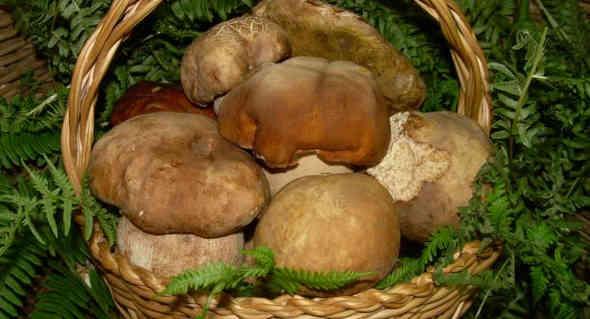 Sagra dei funghi 2017 a Cusano Mutri 🗓