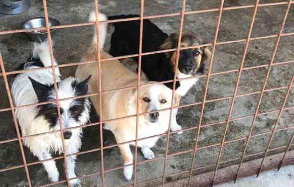 Differenziata e deiezioni canine, gli ispettori ambientali sanzionano i cittadini