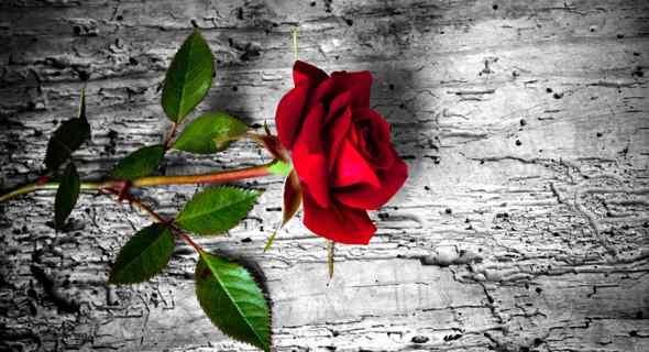 Femminicidio, lutto cittadino nei giorni dei funerali di Maria Arca