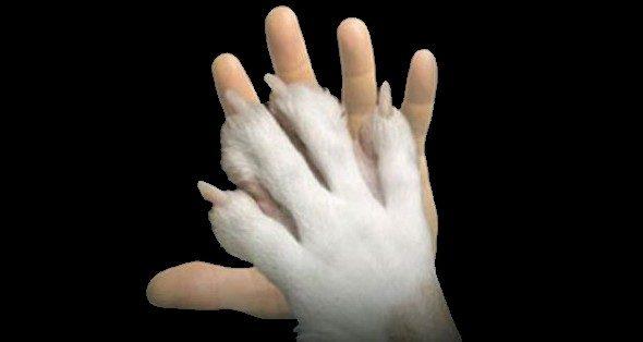 Anagrafe canina, evento il 23 novembre per registrazione e applicazione microchip