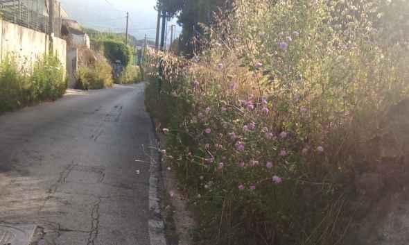 """Pulizia e diserbamento strade secondarie, Appello al sindaco Palomba e all'assessore De Rosa: """"Non ci abbandonate"""""""