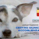Non chiamatelo canile! A Napoli apre il centro per l'accoglienza dei cani