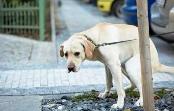 Strade pulite, nel mirino proprietari di cani a passeggio