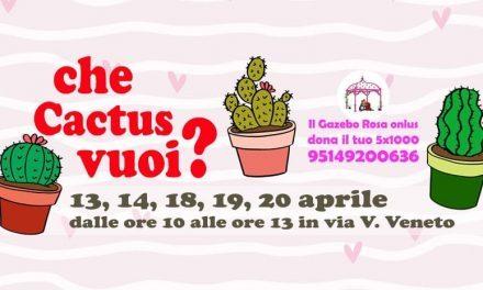Che Cactus vuoi? L'iniziativa per le donne del Gazebo Rosa