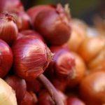 Vatolla: ultimo weekend per la Festa della Cipolla