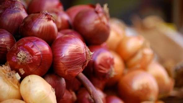 Vatolla: ultimo weekend per la Festa della Cipolla 🗓