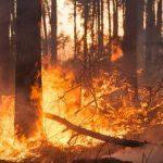 Campania, contrasto agli incendi boschivi: piano da oltre 51 milioni