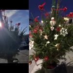Il Comune installa albero di Natale spoglio: ci pensano gli abitanti ad addobbarlo