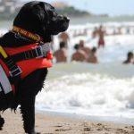 Due cani bagnino salvano 15enne nelle acque di Palinuro