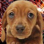 Portici, M5S: fuochi d'artificio tutte le notti, cuccioli terrorizzati
