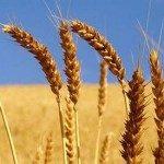 """M5S: """"Psr, fondi impegnati dalla Regione ma soldi mai erogati agli agricoltori"""""""