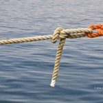 Come amare cose di mare