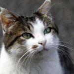 Sindaco vieta ai cittadini di sfamare i gatti