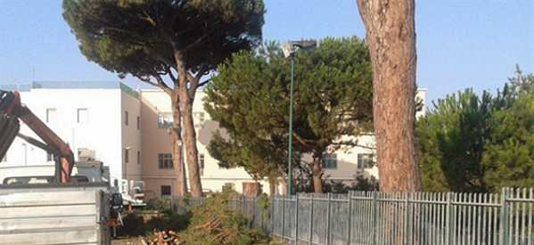 Abbattuto pino secolare vicino a Palazzo La Salle