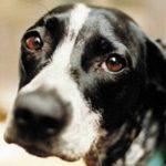Ercolano, cane ucciso a colpi d'arma da fuoco