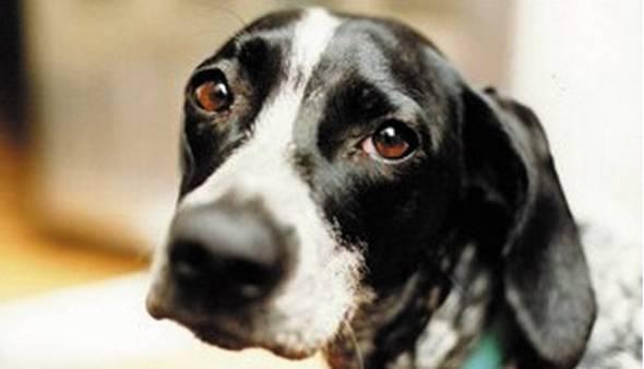 E' attivo il numero verde regionale per il pronto intervento veterinario