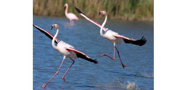 Uccellini Volanti